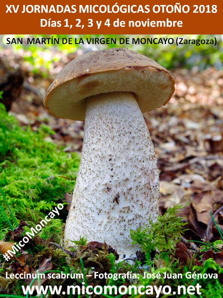 XV Jornadas Micológicas de Otoño 2018 #MicoMoncayo - San Martín de la Virgen de Moncayo (Zaragoza)